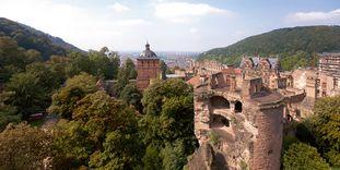 Schloss Heidelberg ist das größte Winterquartier für Fledermäuse in Nordbaden