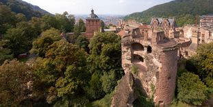 Heidelberg Palace is the largest winter habitat for bats in northern Baden.